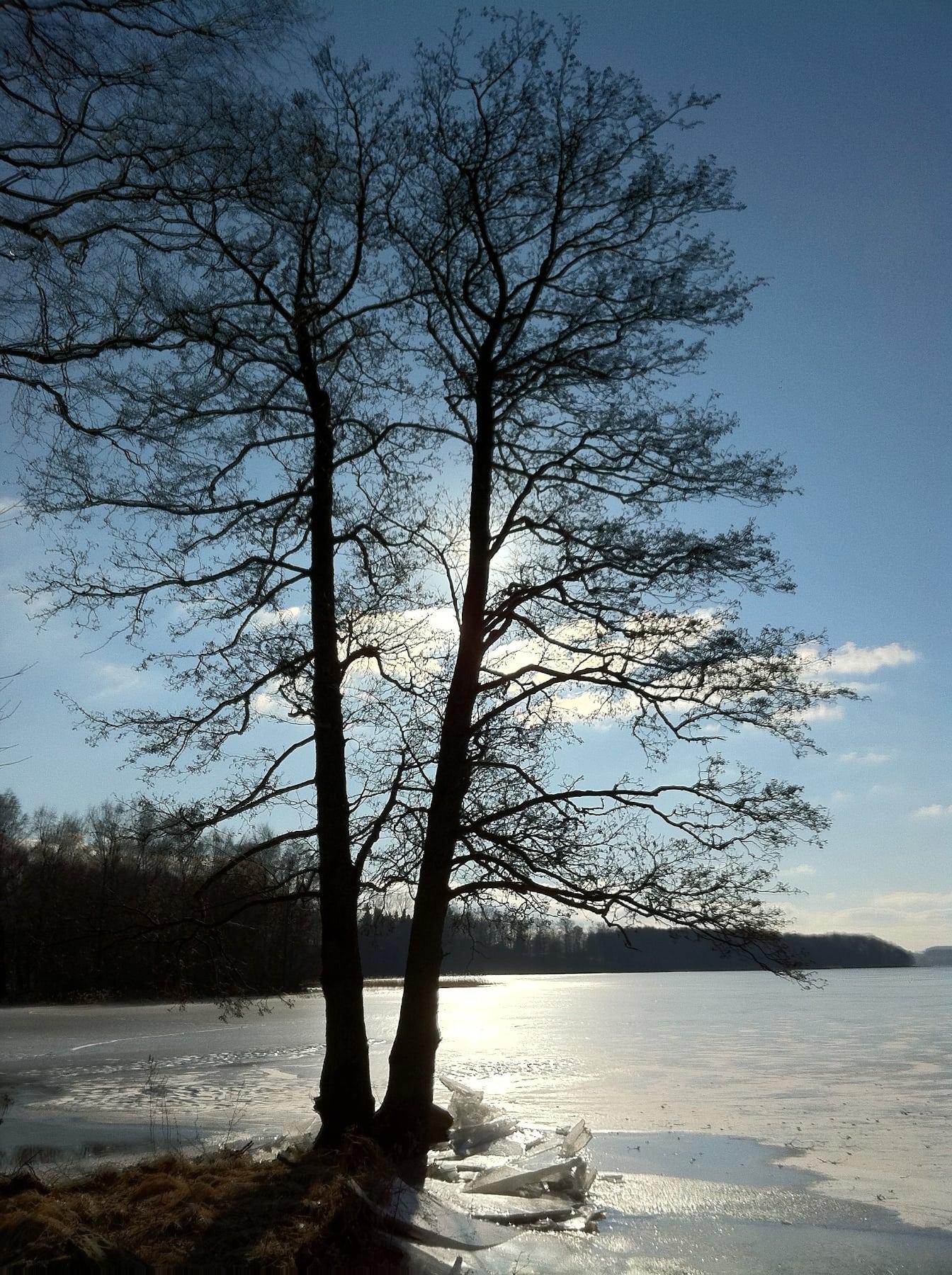 Stanstorp Tree